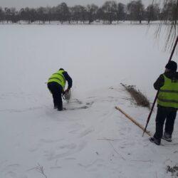 У Рівному комунальники рятують рибу на «Лебединці» (ФОТО)